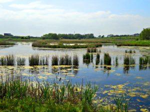Portrack Marsh Tees Barrage